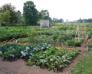 good garden crop