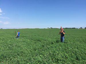 field plots 2